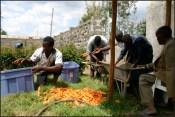 carrot peeling anyone?