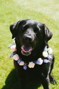 Black lab smiling and showing off his floral crown