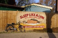 Lion advert