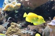 Yello fish