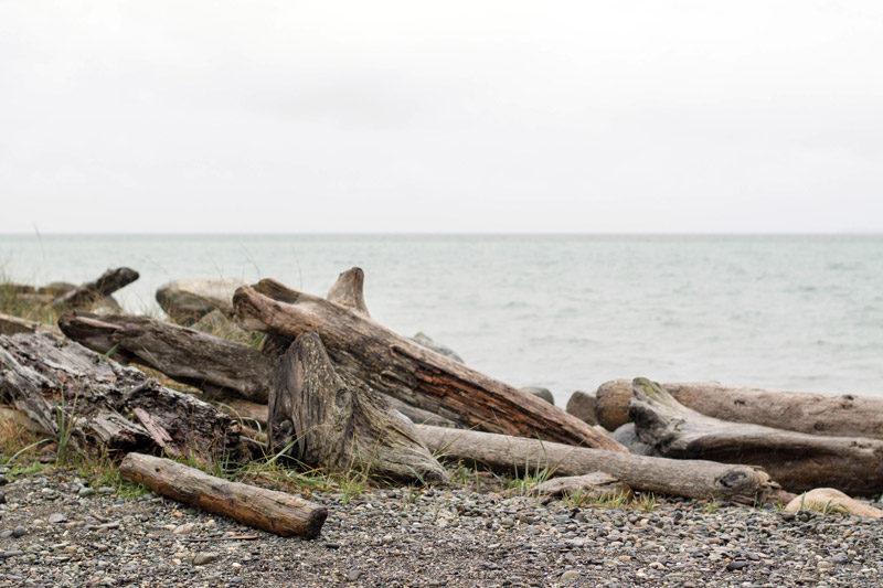washington coast driftwood