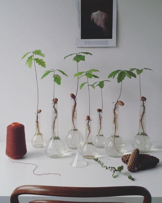 Hydroponie - Planten met hun wortels in water, zonder aarde
