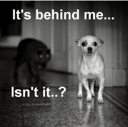 funny cat behind scared dog its behind me isn't it caption photo