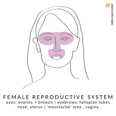 Dien Chan Zone, Italian facial reflexology, female reproductive system, face map.