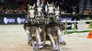 IJsbrand Chardon (NED) was extremely happy with his FEI World Cup™ Driving title. Photo: FEI/Eric Knoll.