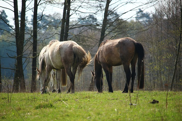 Equine Gastric Ulcer Syndrome (EGUS) update