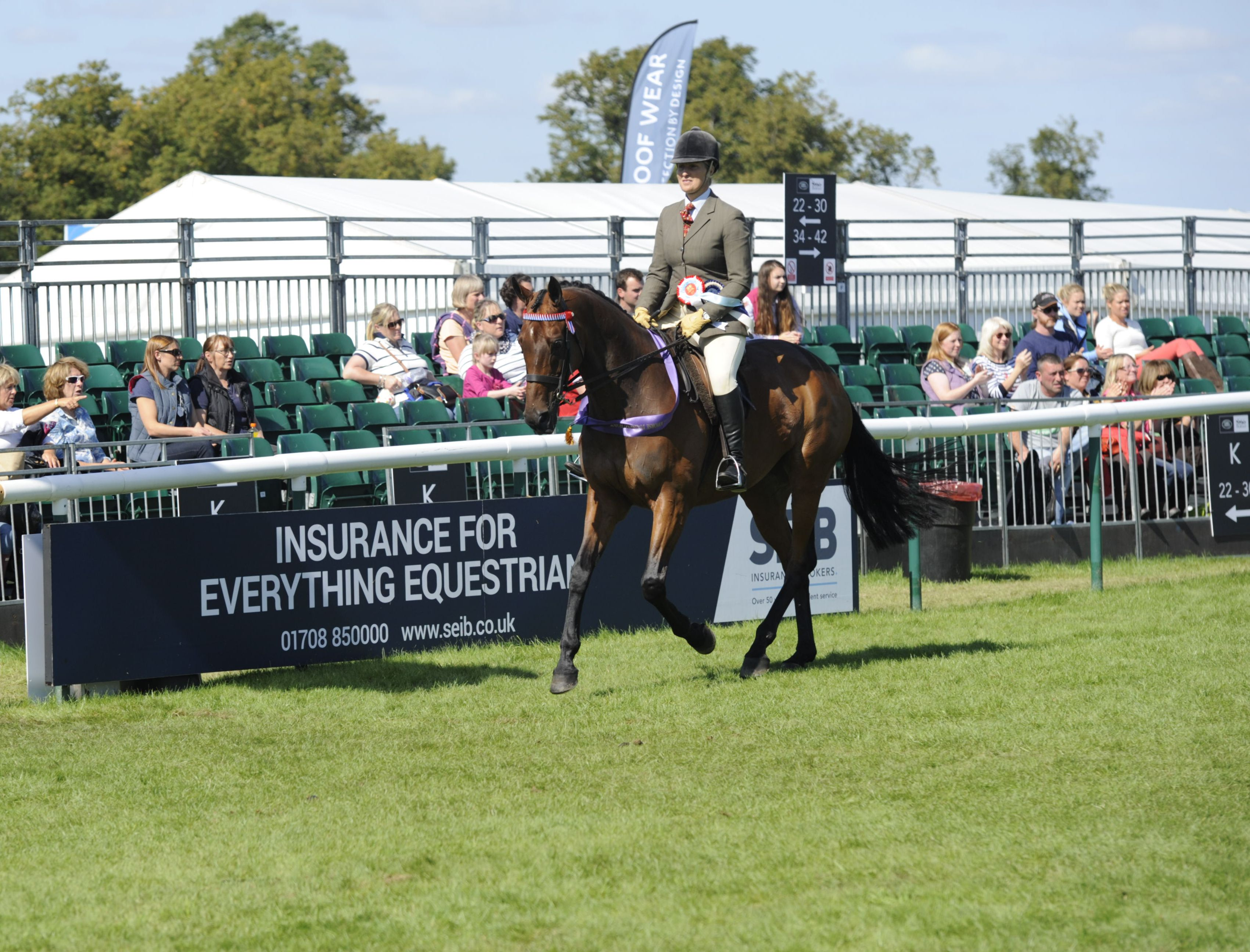 Racehorse to Riding Horse qualifier