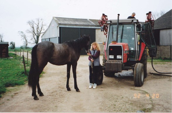Familiarising young horse with farm machinery