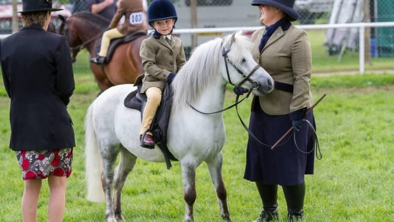 World Horse Welfare Bandit at the Royal Norfolk Show