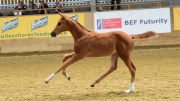 BEF Futurity - Filly goal Florouche JT attained an elite premium in 2015. Credit Kevin Sparrow