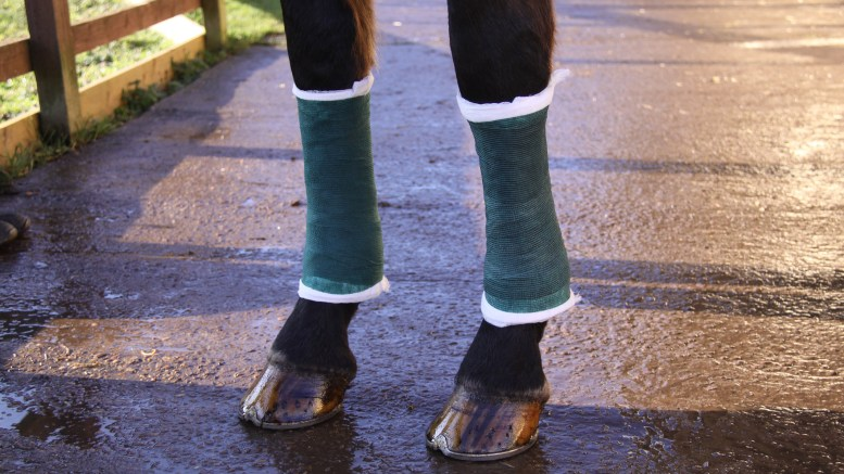 Bandaging - Always bandage both legs to provide support