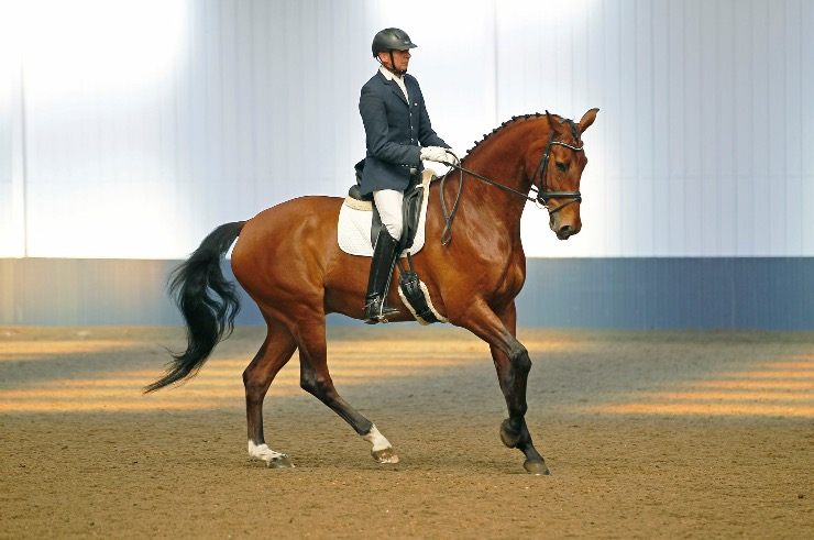 British Dressage Rider, James Burtwell, Qualifies FIVE Westphalian Auction horses for the Winter Championships