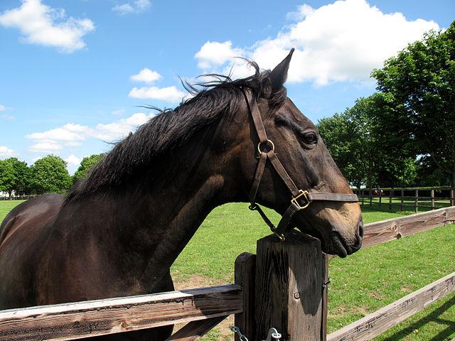 Racehorse Amberleigh House Dies Aged 25