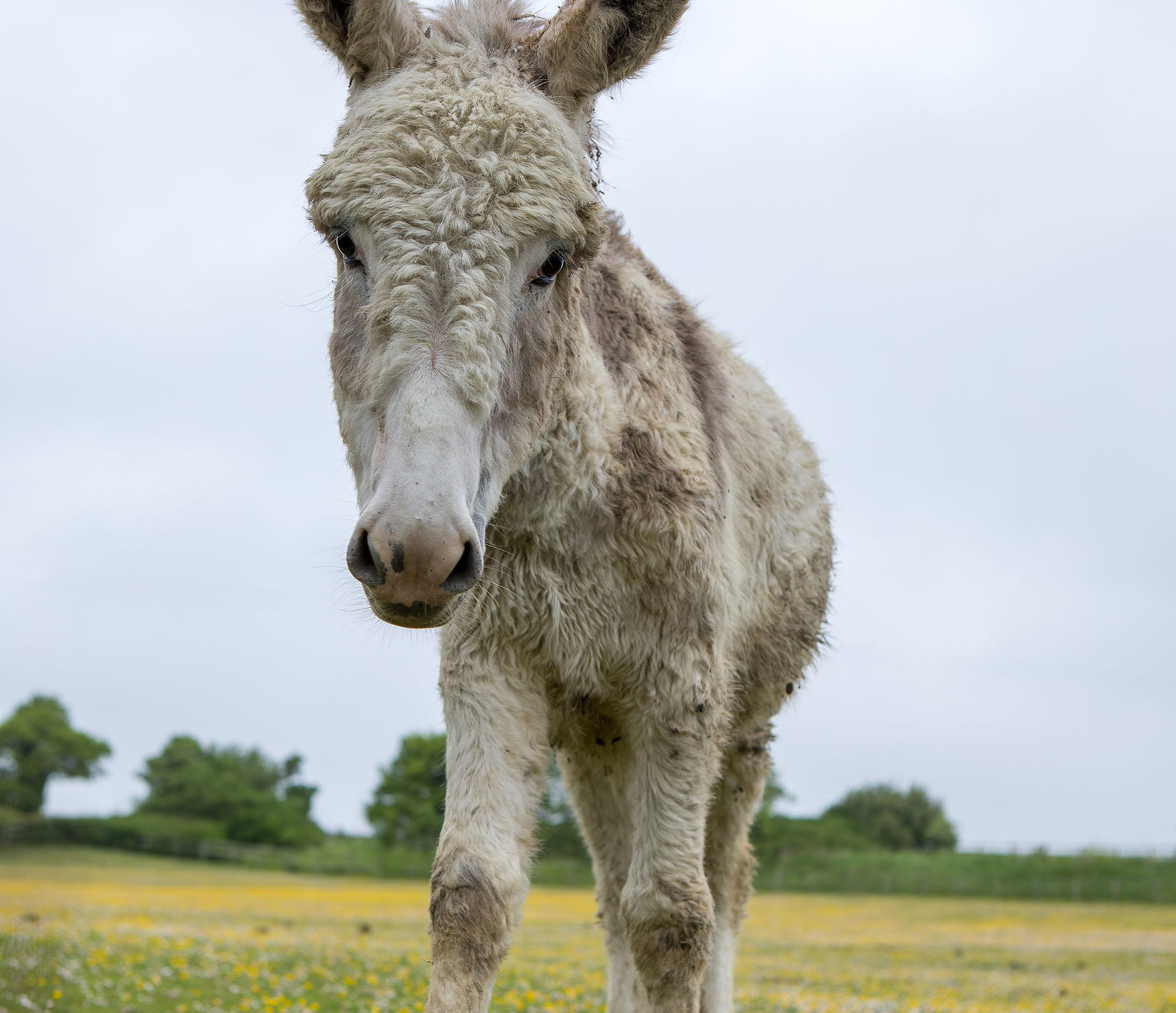 Transit Donkey Secures Happy Future