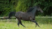 RSPCA's own Black Beauty looks for five star home