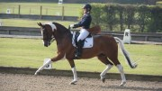 WIN TopSpec sponsorship!! Mr Mercury, Addington Premier League, ridden by Amy Schiessl and owned by Gina Schiessl