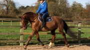 Steph Gumn - SG Sports Horses www.sgsportshorses.co.uk