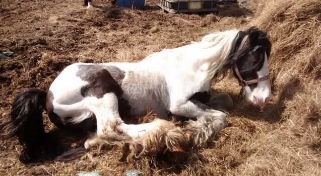 Suspended jail sentence and life equine ban for Barnsley man