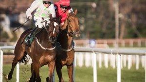 Cheltenham Festival 2020 racing