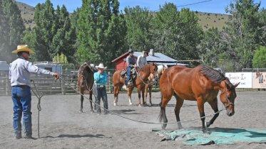 Natural Horsemanship with Joe Wolter