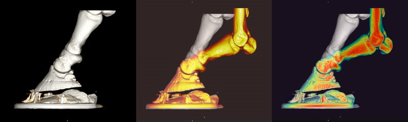 Models of a shod foot with a packer comparing hoof deformation in walk (white) and trot (yellow)