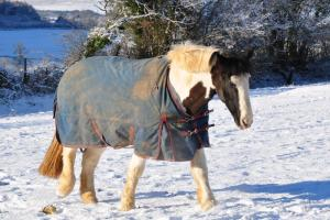 Top Tips to Beat the Freeze from HorseHage & Mollichaff!