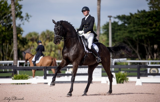 Stephen Hayes competing Lou Heart in the PSG at Global Dressage 2018
