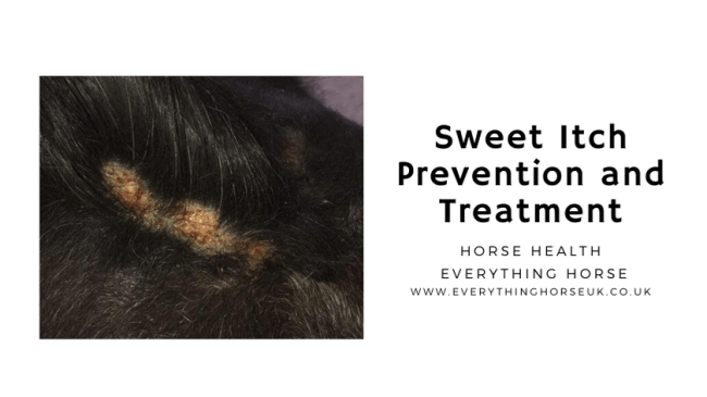 Sweet Itch Prevention and Treatment
