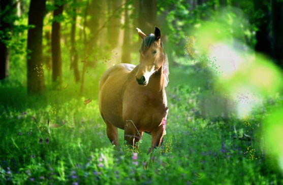 A Horse Owners Guide to Surviving Spring.