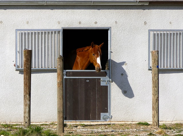 New Strain of Equine Influenza Responsible for Outbreak