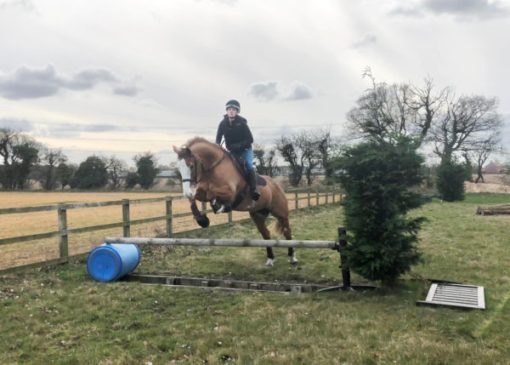 Training Jumping ditches - To introduce your horse to a trakehner use a showjumping pole above the ditch.