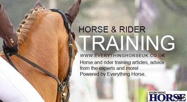 horse and rider training horse training everything horse
