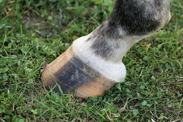 damaged hooves