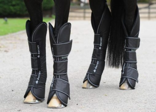 Best Travel Boots for Horse - Everything Horse
