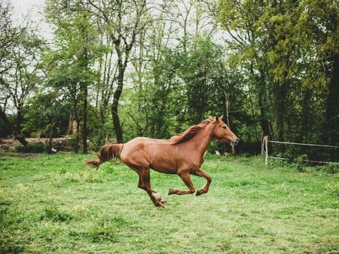 Students graduate from Equine Locomotor Research