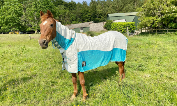 best lightweight turnout rugs - animac allrounder fly combo