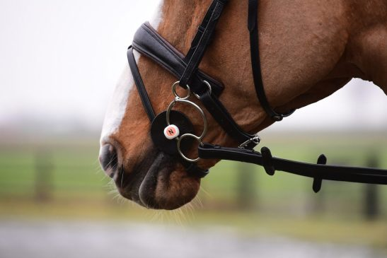 Nathe Bits join Sprenger, image of a Nathe bit in horses moutn