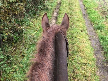 Training a Horse to Hack Alone with Harriet Morris Baumber