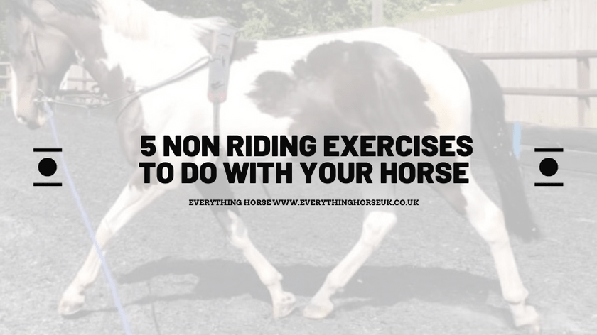 5 non riding exercises to do with your horse