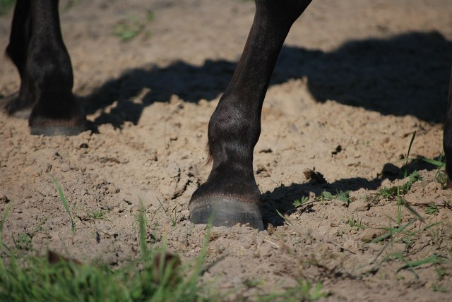Joint Supplements for Horses - Glucosamine and chrodroitin sulphate work together to ensure optimal musculoskeletal health