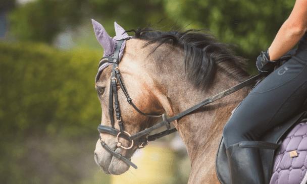 types of horse bit