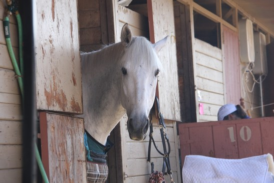 Glucosamine Side Effects For Horses - horse pictured in a stable