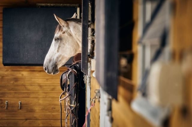 Nutritional Support for the Competition Horse