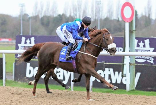Arabian stallions handicap Loolwa