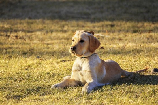 Safety tips for dogs