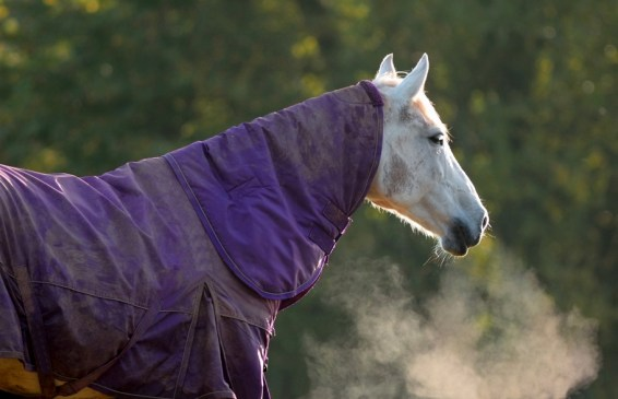 Benefits to buying a horse rug