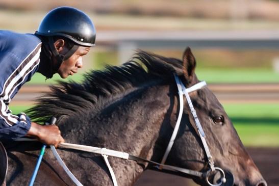 feeding of sport horses