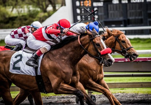 Horses racing How To Elevate Your Bets With Gulfstream Park Picks