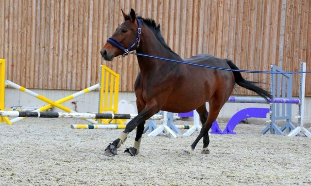 Best inhand exercises for horses
