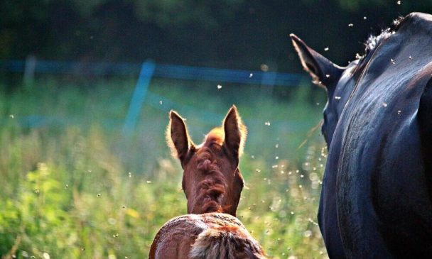 Horse Fly Spray - Ingredients You Need To Know About